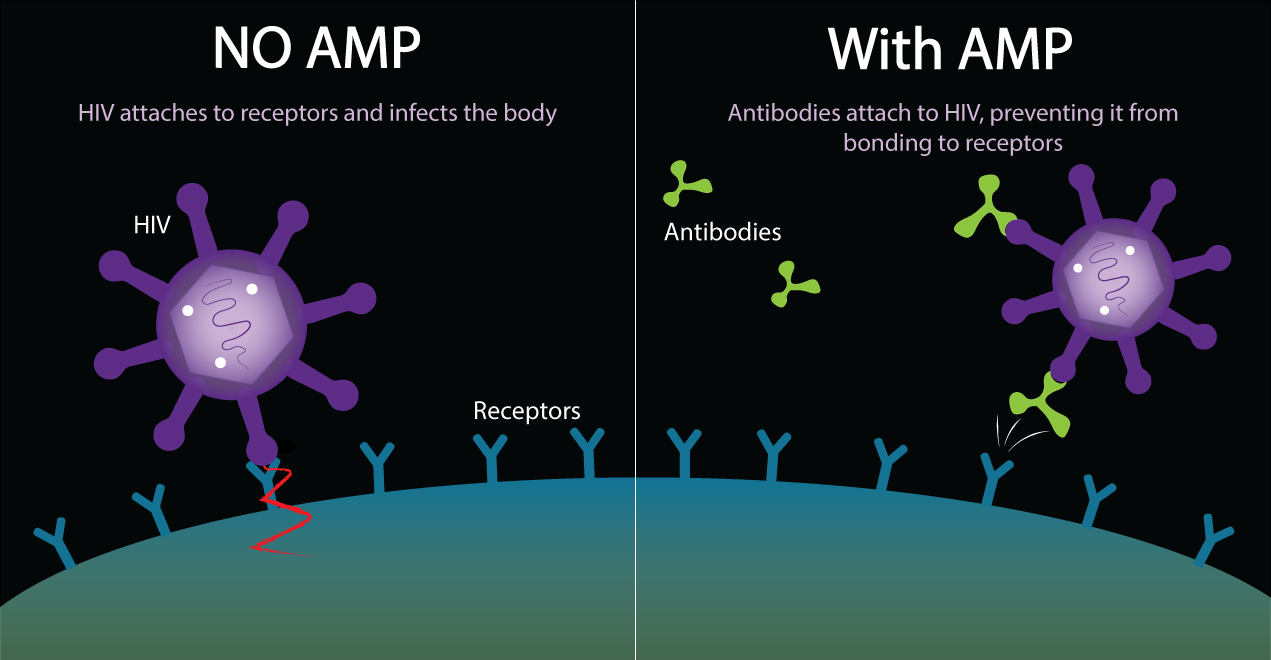Antibody mediated prevention